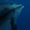 Die besten Delphin Bilder